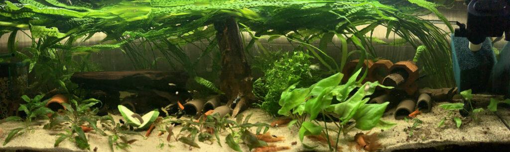 Akwarium panorama blog