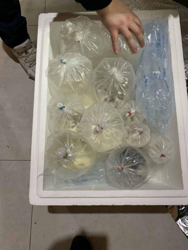 Box pakowanie ryb