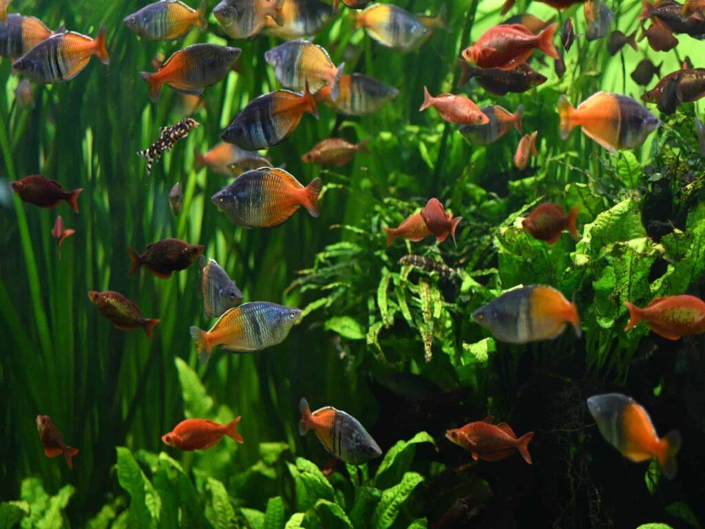 Sadzenie roślin wakwarium inapełnianie akwarium wodą