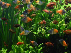 Sadzenie roślin wakwarium inapełnianie akwarium wodą.