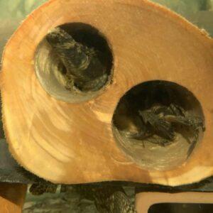 Grota drewniana z Brzozy dla Zbrojnika_1