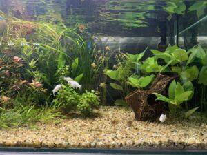 dojrzałe akwarium